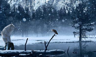cropped-winterwolf