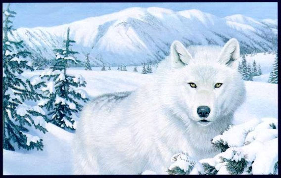 GrayWolfScan3-WhiteFur_in_snow_forest-Painting