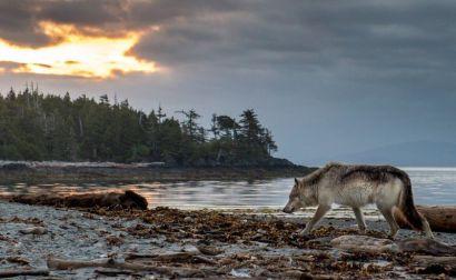 header-welcome-wolf