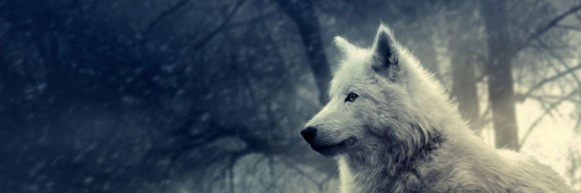 white-wolf-desktop-wallpaper_1175659