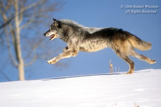 Winter Wolf 5-04W8C-L