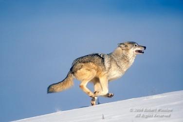 Winter Wolf C-16W8C-L