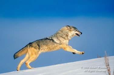 Winter Wolf C-17W8C-L