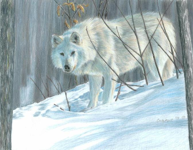 winter-wolf-carla-kurt