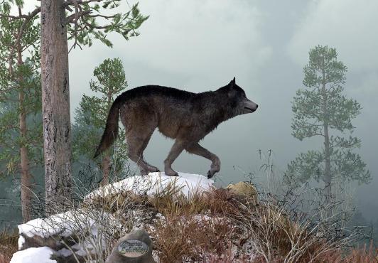 winter-wolf-daniel-eskridge