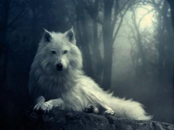 winter wolf moon snow white wallpaper desktop background Beautiful 103 best Desktop Wallpapers images on Pinterest