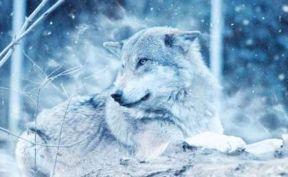 WINTER-WOLF-SNOW-poster-WEB
