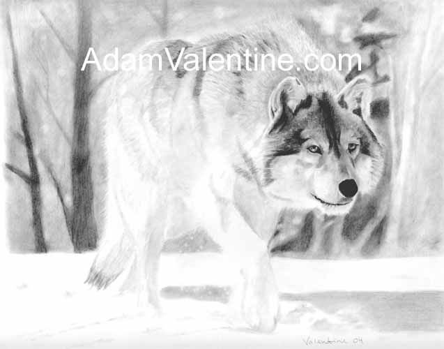 wolf-pic