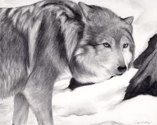wolf-sketch-pencil