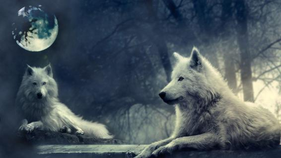 wolves-the-moon